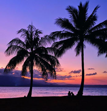 people sitting under palm trees at sunset
